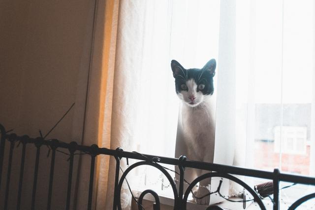 Kitty Misfit-8933