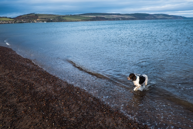 fortrose-walking-maisy-7