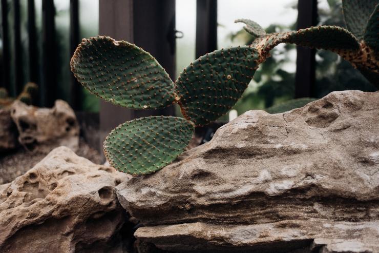 Katy, Botanic Gardens-3