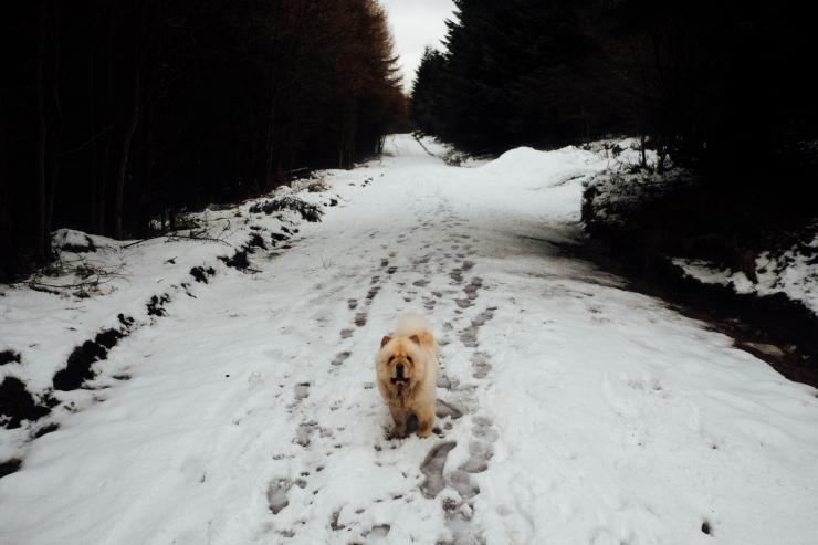 Robyn, Dalby Forest-55