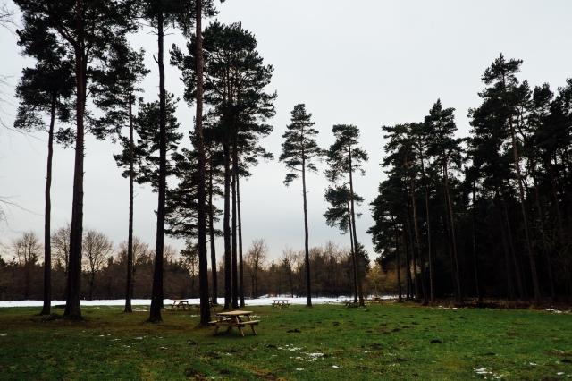 Robyn, Dalby Forest-8