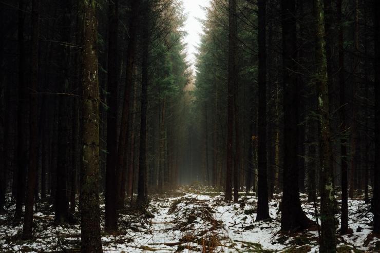Robyn, Dalby Forest-12