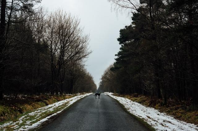 Robyn, Dalby Forest-4