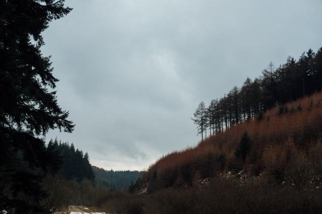 Robyn, Dalby Forest-42