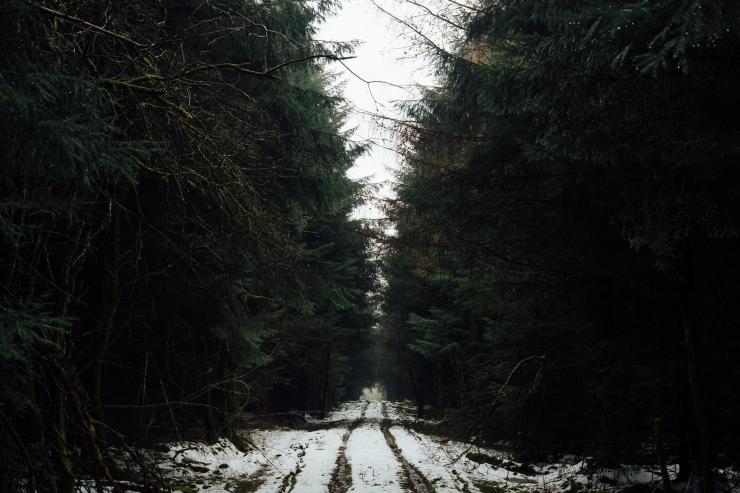 Robyn, Dalby Forest-7