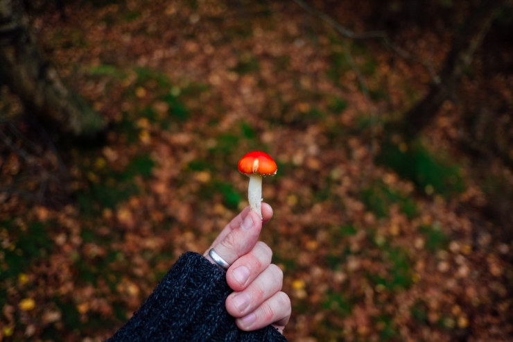 Mushroom Walk-33