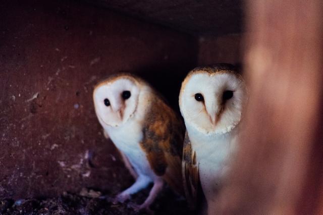 Whitby Wildlife Sanctuary-12