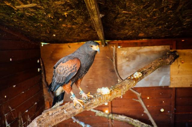 Whitby Wildlife Sanctuary-23