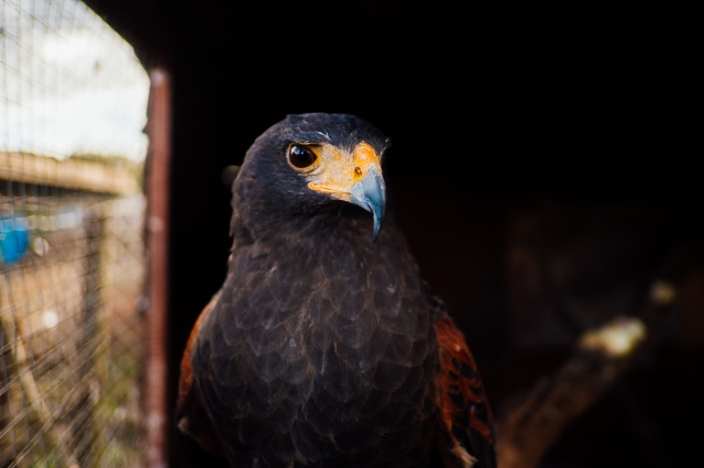 Whitby Wildlife Sanctuary-28