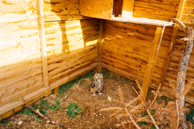Whitby Wildlife Sanctuary-33