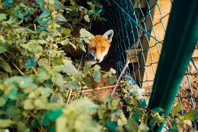Whitby Wildlife Sanctuary-38