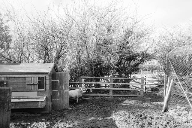 Whitby Wildlife Sanctuary-41