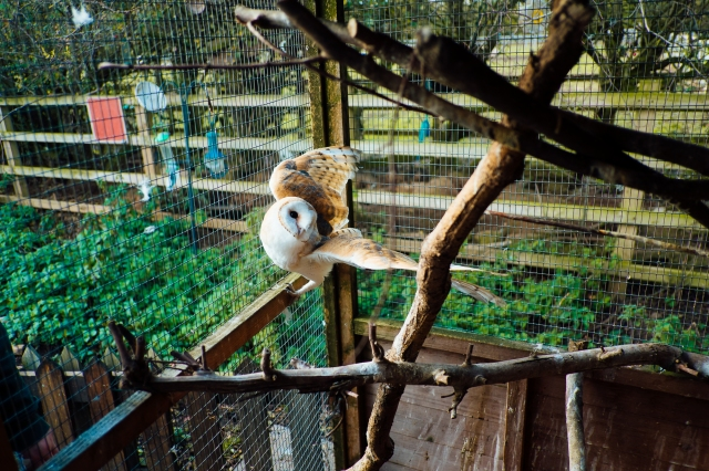 Whitby Wildlife Sanctuary-5