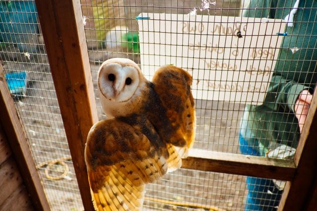 Whitby Wildlife Sanctuary-7