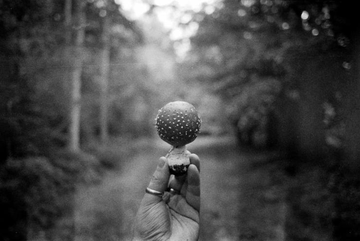 HP5, Mushroom-01