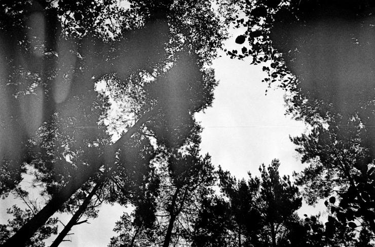 HP5, Trees-01